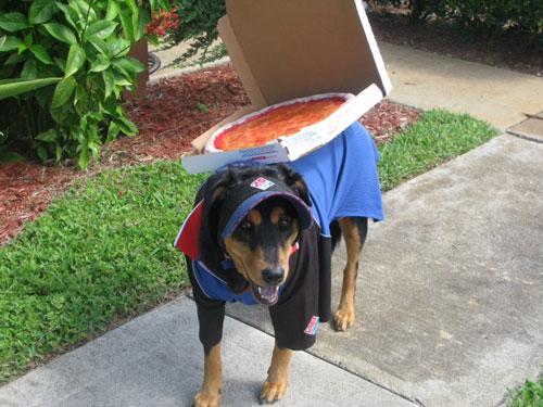 domino s pizza sizzles